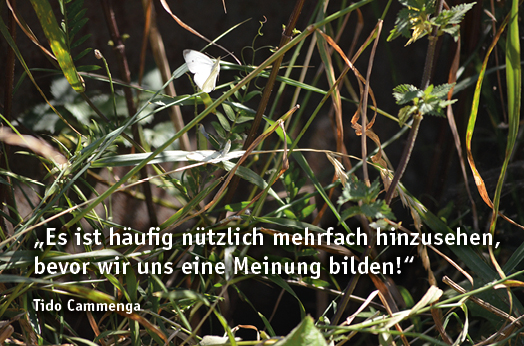 zlb_kohlweißlinge